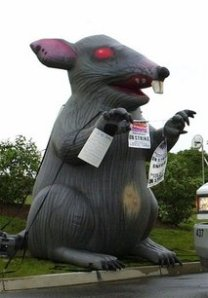 This file photo by the Associated Press shows a large, inflated rat used at a N.J. union protest in 2001.